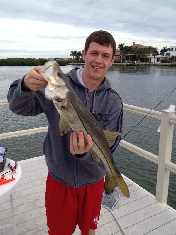 Snook love to hit top water lures and they can even be hooked just casting off the dock anywhere in Florida's inter-coastal waterway.