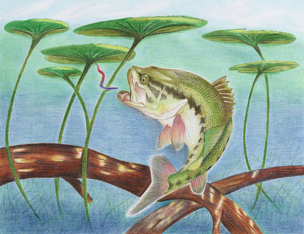 "Catherine Chen titled her artwork, ""Tranquility"". capturing one of largemouth bass favorite habitat...lilly pads!"