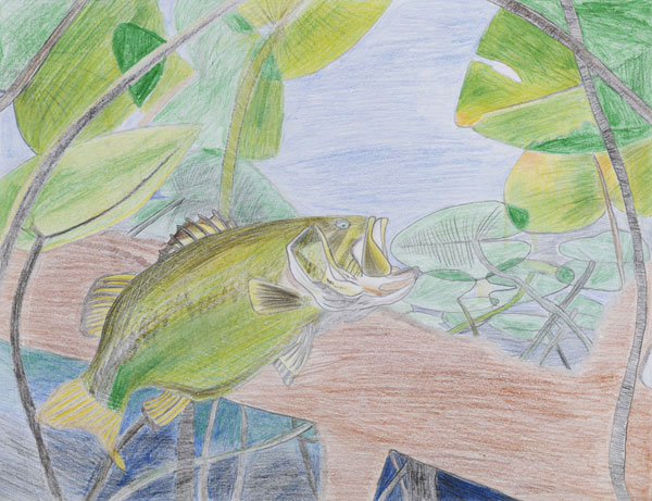 Faith Chiu used soft colors and texture to capture the underwater world of the largemouth bass.