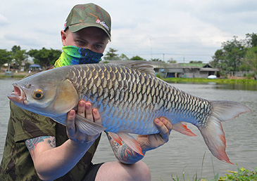 A Danish angler caught a new rod & reel record 7.5 kg Mad Barb in December 2013 fishing the Palm Tree Lagoon Fishing Park in Thailand. This water hosts a broad range of native and non-native species.