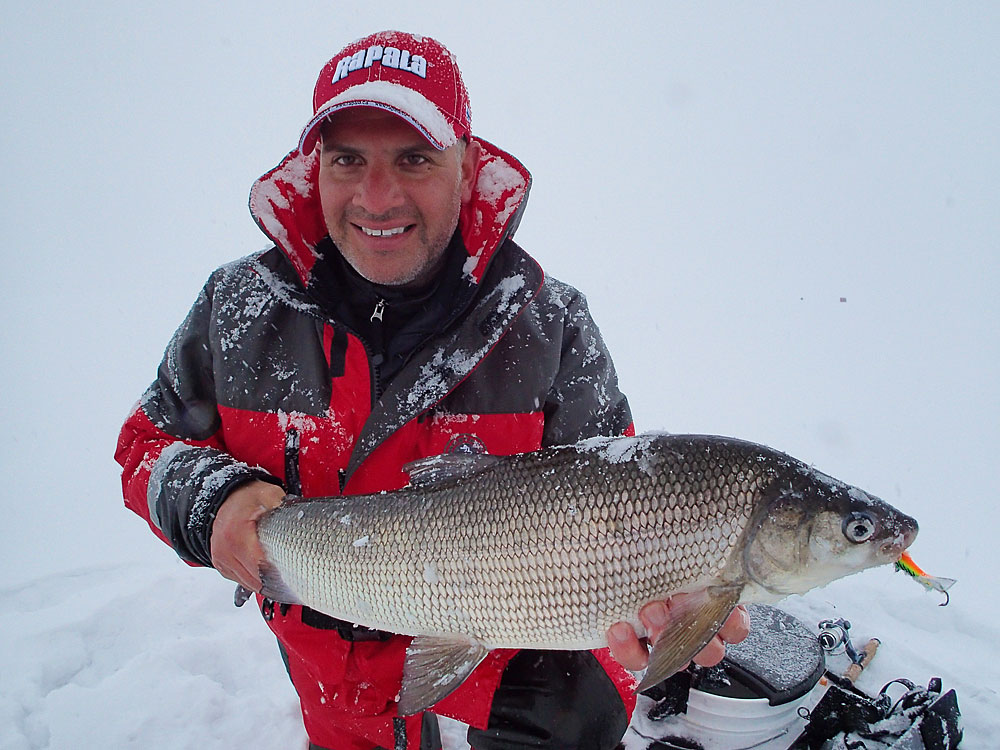 A firetiger Jigging Rap took the only whitefish of the day