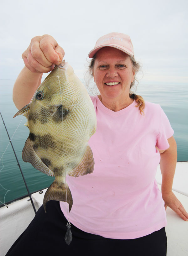 """This trigger fish also called an Ocean Tali was a pleasant surprise when it took Barb's shrimp in 40' of water.  They fight hard, taste great, but beware of the """"trigger"""" on the back that locks in place and can do some damage."""
