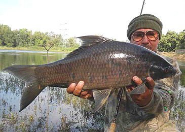 Orangefin Labeo is a fish of the carp family Cyprinidae, found commonly in rivers and freshwater lakes in and around South Asia and South-East Asia.