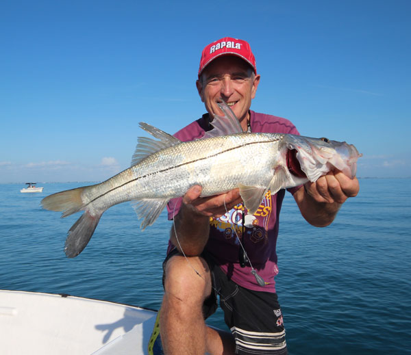 This Snook picked-up a fresh shrimp fished on the bottom over a reef in 40' of water.