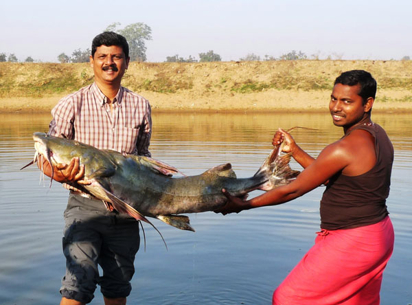 Debjit gets help holding up this 90 lb. Goonch Catfish that was caught in the Orissa region of India.