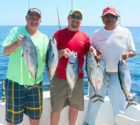 A nice catch of Bonita tuna caught off of Los Cabos trolling with surface plugs.
