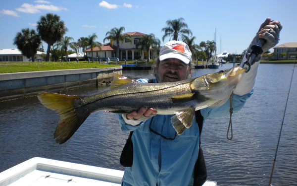 Snook are beautiful fish that take live bait and artificials readily, fight hard and taste great!