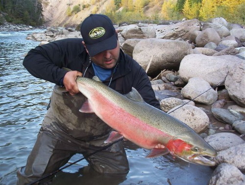 Here is my good friend Rob Vodola with a beautiful buck Steelhead caught on the Zymoetz (Copper) River.
