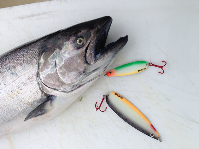 The Matrix spoons were specifically designed for trophy Great Lakes multi-species trolling.