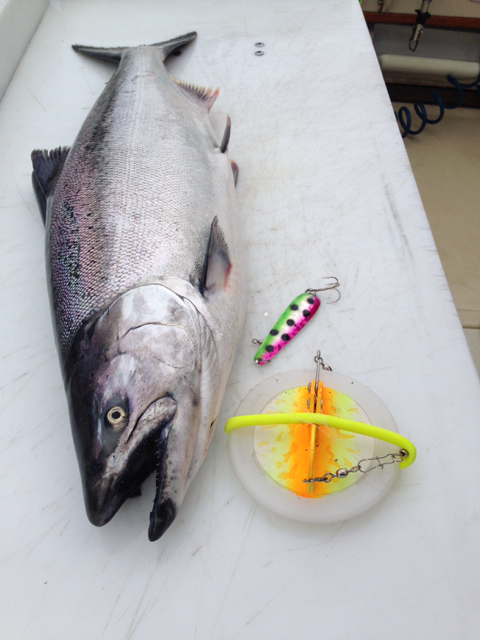 "Each spoon is heavy-duty construction for Salmon fishing. They are rigged with a welded ring on head end and a heavy duty split ring with metal flipper hook on the ""business-end"". They are premium plated and polished for maximum flash and corrosion resistance. In addition, a UV bright finish reflects more light energy, strengthening the lure's visibility to feeding fish!"