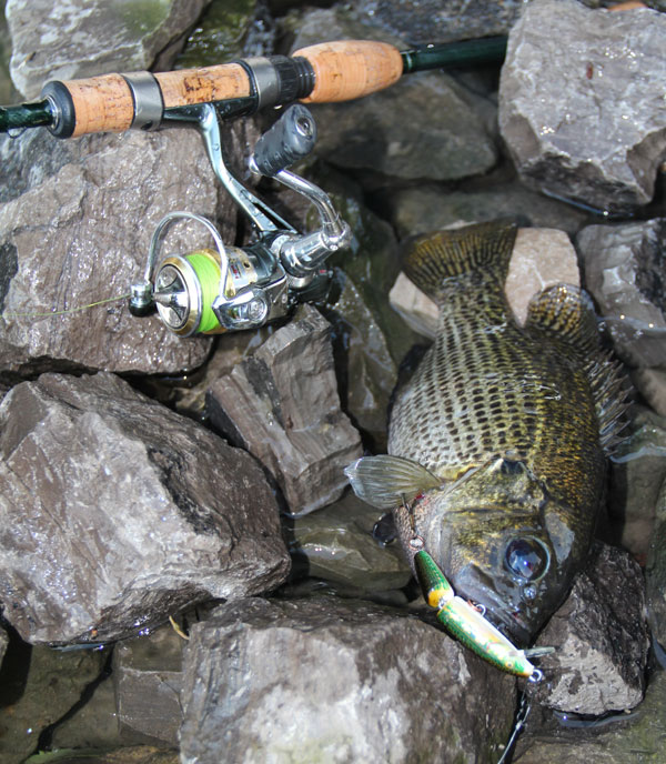 Ultralight Fishing For Panfish With The Rapala F2 Spinning