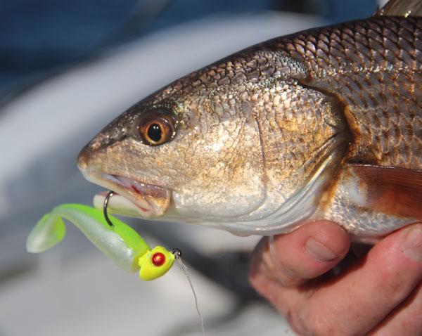 redfish_jig