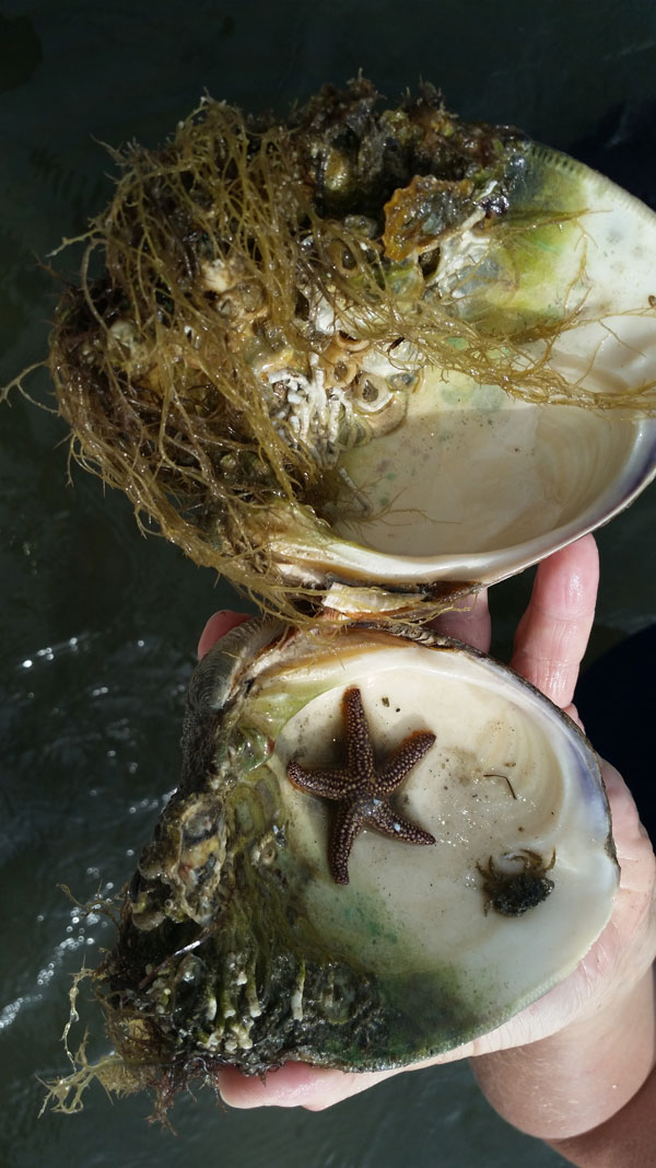 clam_life