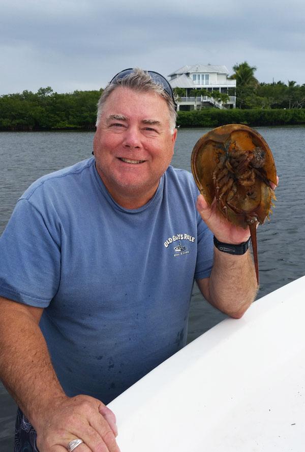tom_horseshoe_crab
