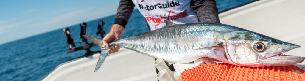 """YES-TV Canadian Sportfishing Show, 7am, Sept. 26, 2020 """"Florida Saltwater Action."""", YES-TV."""