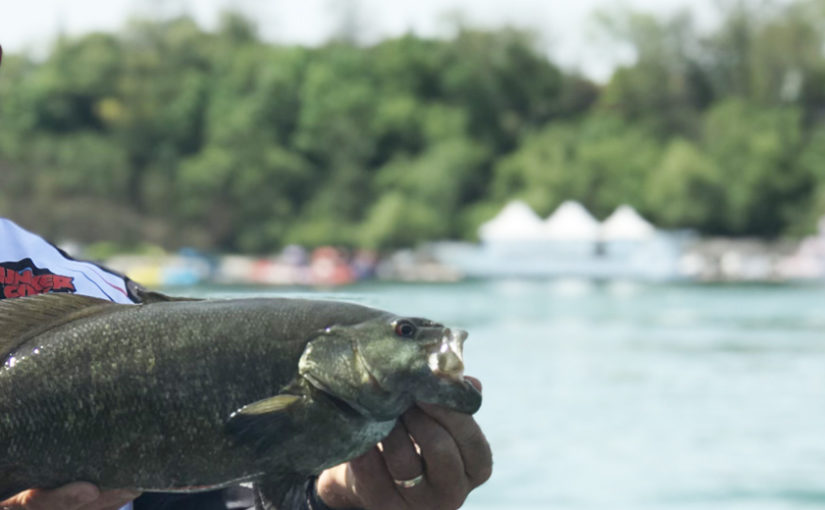 """YES-TV Canadian Sportfishing Show, 7am, April 17, 2021 """"Twitching Bass Action."""", YES-TV."""