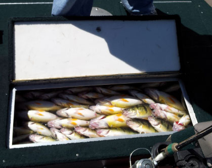 perch_livewell01