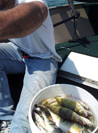 Lake Erie, ON Jumbo Perch Action! | Canadian Sportfishing
