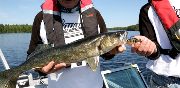 We found this trophy walleye cruising around the weeds we marked with our Raymarine fishfinder!