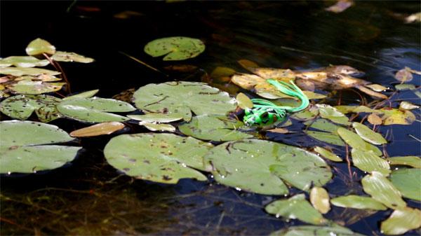 storm_frog_lilypad