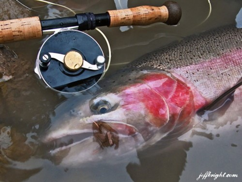 Catch and release wild Steeelhead on the spey rod. Photo courtesy of Jeff Bright.