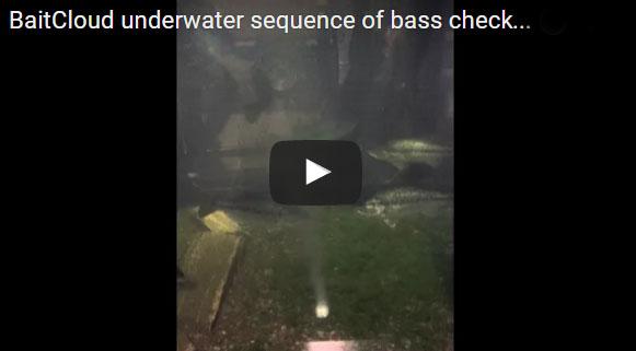 20160222 Bass BaitCloud Underwater