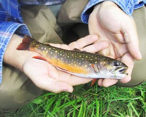 brooktrout_hand