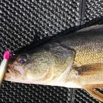 Italo video, Vigurus mat for fish cleaning.