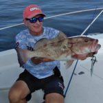 Gulf Grouper, FL.