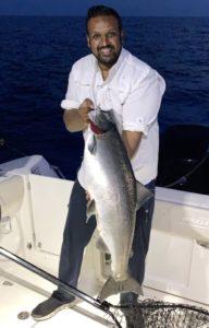 Sardine Salmon