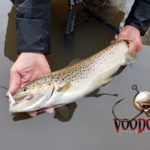 Add some Voodoo for Steelhead and Migratory Brown trout success!