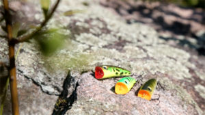 panfish topwater popers
