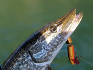 pike jointed rapala